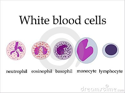 Leukocyte count