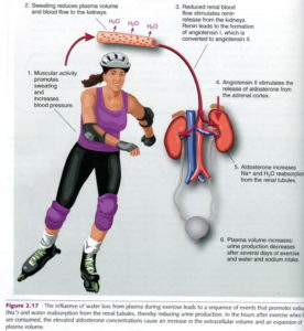 effect exercise blood pressure