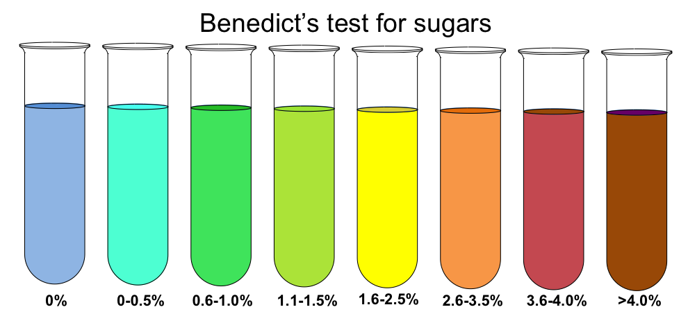 carbohydrate detection test Acid detection' is probably the most accurate term for describing the results obtained in tests designed to detect acid production from carbohydrates the terms 'carbohydrate utilization' and 'fermentation' should not be used to describe acid production by neisseria spp.