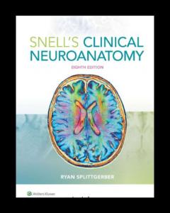clinical neuroanatomy pdf