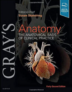 Gray's anatomy The Anatomical Basis Of Clinical Practice pdf