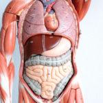 Best & Easy Anatomy Mnemonics Pdf Download: