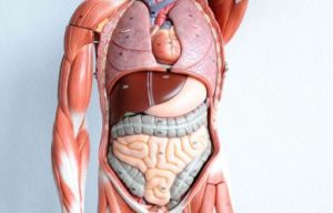 anatomy-mnemonics-pdf-