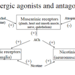 Cholinergic agonist and antagonist drugs classification List: