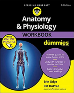 Anatomy and Physiology Workbook For Dummies 3rd Edition PDF